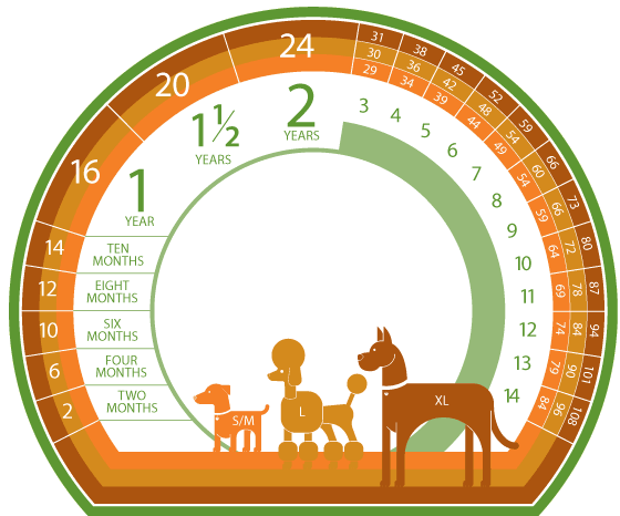 German Shepherd Height Chart http://udoscheindel.girlshopes.com/chartofdogagesbyweight/