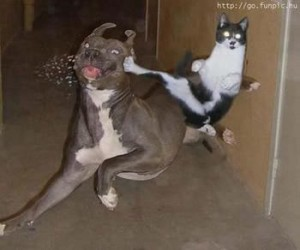 cats chasing dog