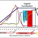 Hormones of dogs in pregnancy