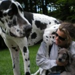 When to breed giant dogs