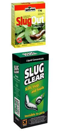What Happens When A Dog Eats A Slug