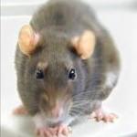 How rat poisons affect pets
