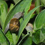 How snail bait can harm your pet