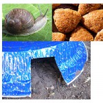 Safe ways to rid your garden of snails