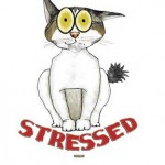 Feline stress behavior