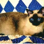 Thai traditional siamese
