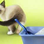 Getting cats to use litter