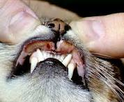 Cortisone used to treat Rodent ulcers