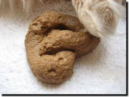 why dogs poo inside on the carpet