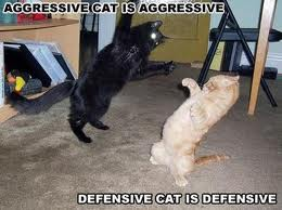 altering behaior of an aggressive cat