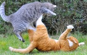 advice on pets cats fighting - how to stop it