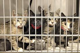 FIP found in shelter cats