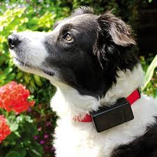 collar that stops dog barking