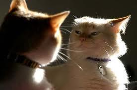 stop indoor cats fighting
