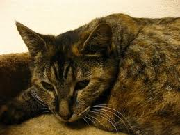 treating feline kidney failure
