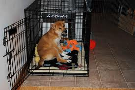 my dog hates her crate